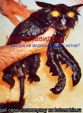 Котоматрица: Чего уставились? Никогда не видели мокрых котов?