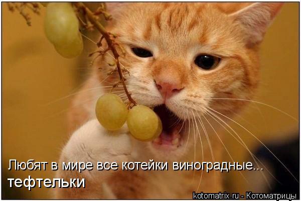 Любят в мире все котейки виноградные... тефтельки