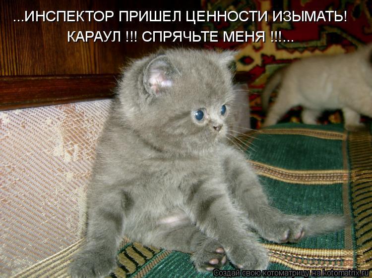 Котоматрица: ...ИНСПЕКТОР ПРИШЕЛ ЦЕННОСТИ ИЗЫМАТЬ! КАРАУЛ !!! СПРЯЧЬТЕ МЕНЯ !!!...
