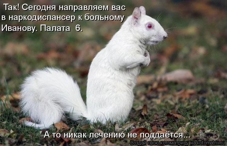 Котоматрица: Так! Сегодня направляем вас в наркодиспансер к больному Иванову. Палата №6. А то никак лечению не поддаётся...