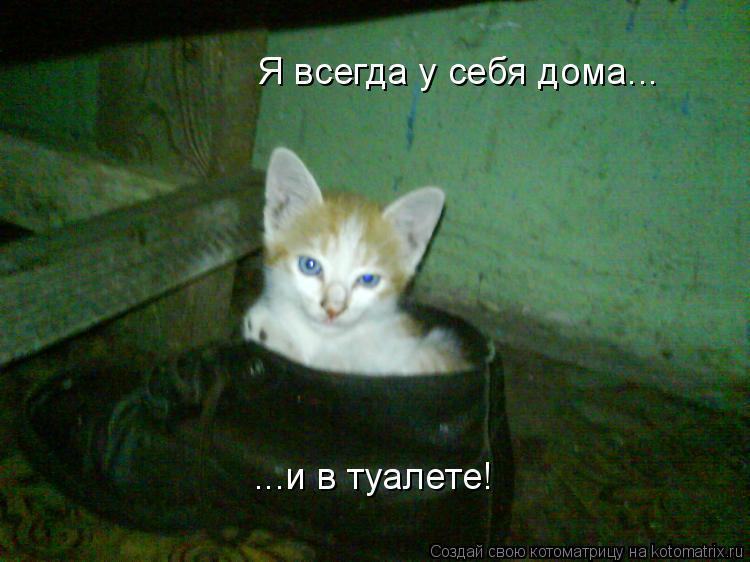 Котоматрица: Я всегда у себя дома... ...и в туалете!