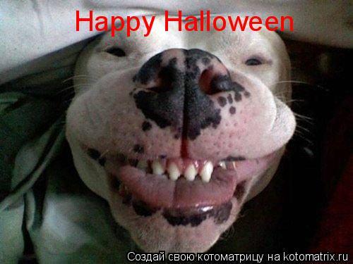 Котоматрица: Happy Halloween