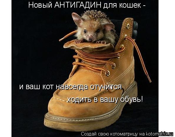 Котоматрица: Новый АНТИГАДИН для кошек -  и ваш кот навсегда отучится ходить в вашу обувь!