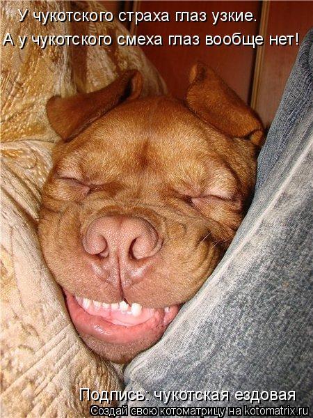Котоматрица: У чукотского страха глаз узкие. А у чукотского смеха глаз вообще нет! Подпись: чукотская ездовая