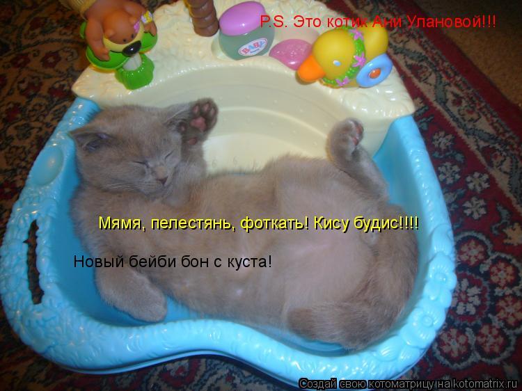 Котоматрица: P.S. Это котик Ани Улановой!!! Новый бейби бон с куста! Мямя, пелестянь, фоткать! Кису будис!!!!