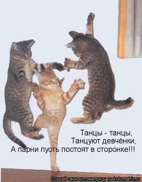Котоматрица: Танцы - танцы, Танцуют девчёнки, А парни пусть постоят в сторонке!!!
