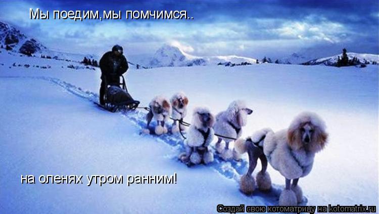 Котоматрица: Мы поедим,мы помчимся.. на оленях утром ранним!