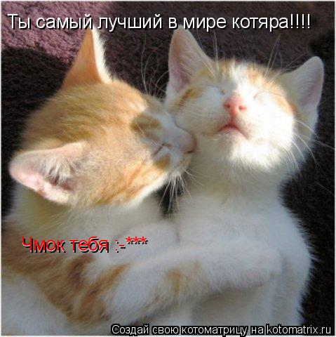 Котоматрица: Ты самый лучший в мире котяра!!!! Чмок тебя :-*** Чмок тебя :-***