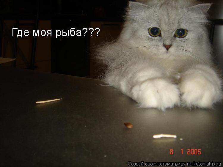 Котоматрица: Где моя рыба???