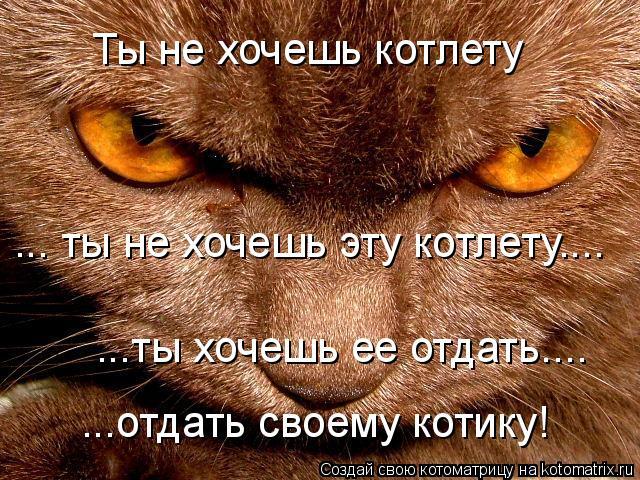 Котоматрица: Ты не хочешь котлету ... ты не хочешь эту котлету.... ...ты хочешь ее отдать.... ...отдать своему котику!