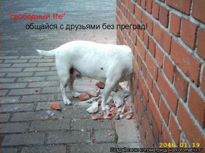 """Котоматрица: """"свободный life"""" общайся с друзьями без преград!"""