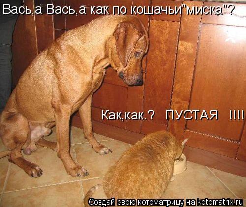 "Котоматрица: Вась,а Вась,а как по кошачьи""миска""? Как,как.?   ПУСТАЯ   !!!!!"