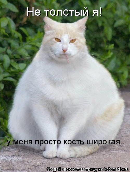 Котоматрица: Не толстый я! у меня просто кость широкая...