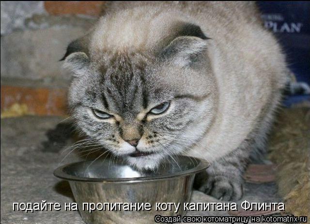 Котоматрица: подайте на пропитание коту капитана Флинта