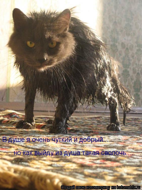 Котоматрица: В душе я очень чуткий и добрый... но как выйду из душа такая сволочь....