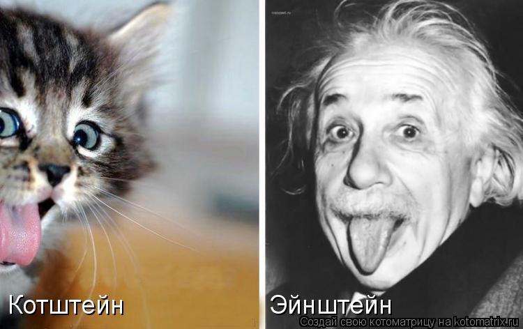 Котоматрица: Эйнштейн Котштейн