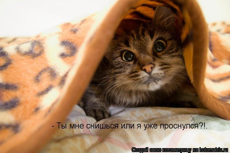 Котоматрица: - Ты мне снишься или я уже проснулся?!.