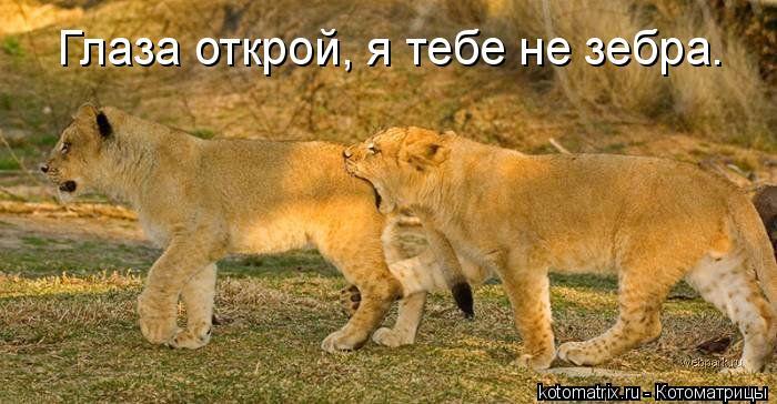 Котоматрица: Глаза открой, я тебе не зебра.
