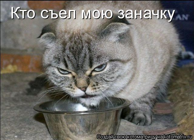 Котоматрица: Кто съел мою заначку
