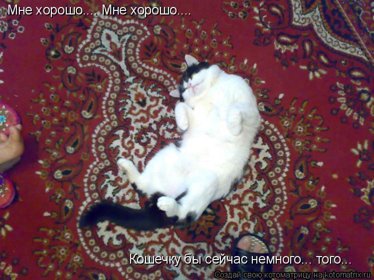 Котоматрица: Мне хорошо.... Мне хорошо.... Кошечку бы сейчас немного... того...