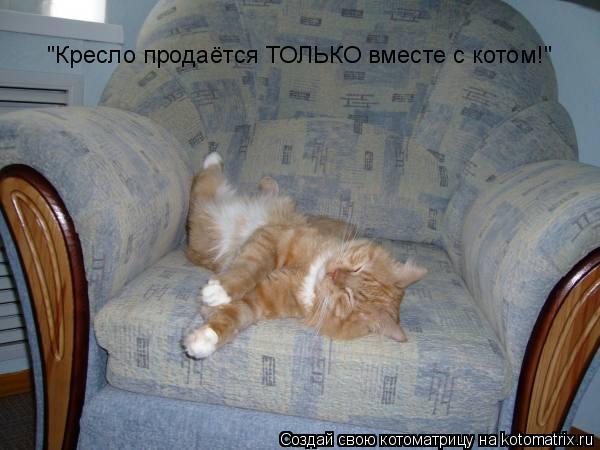 """Котоматрица: """"Кресло продаётся ТОЛЬКО вместе с котом!"""""""