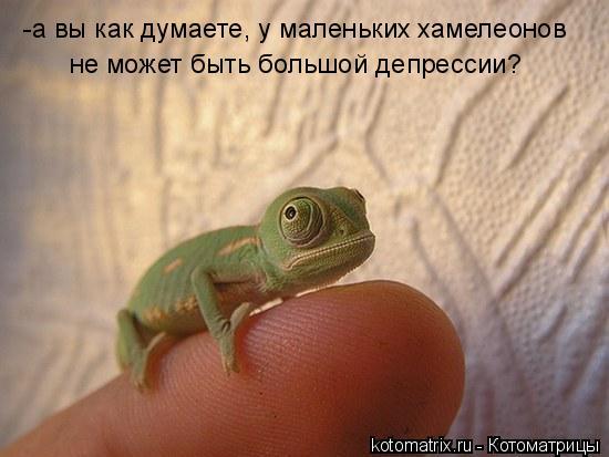 Котоматриця!)))) - Страница 4 424106