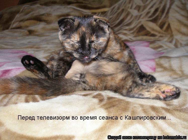 Котоматрица: Перед телевизорм во время сеанса с Кашпировским...