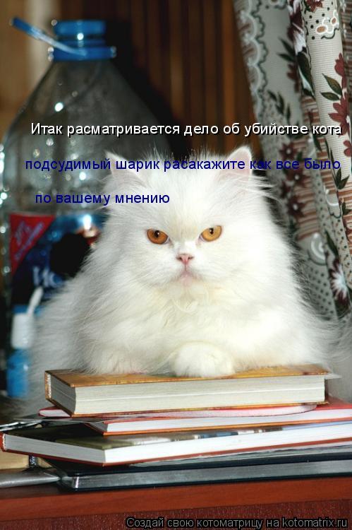 Котоматрица: Итак расматривается дело об убийстве кота подсудимый шарик расакажите как все было по вашему мнению
