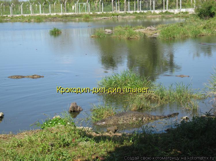 Котоматрица: Крокодил-дил-дил плывет...