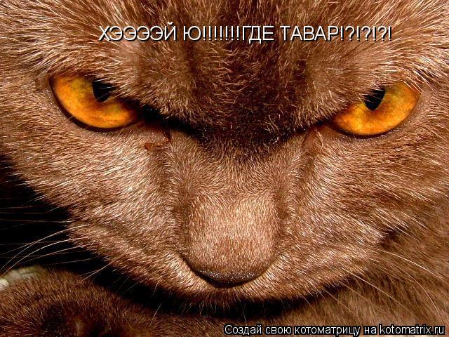Котоматрица: ХЭЭЭЭЙ Ю!!!!!!!ГДЕ ТАВАР!?!?!?!