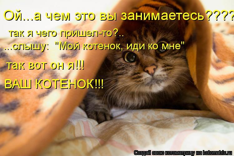 """Котоматрица: Ой...а чем это вы занимаетесь???? так я чего пришел-то?.. ...слышу:  """"Мой котенок, иди ко мне"""" так вот он я!!! ВАШ КОТЕНОК!!!"""