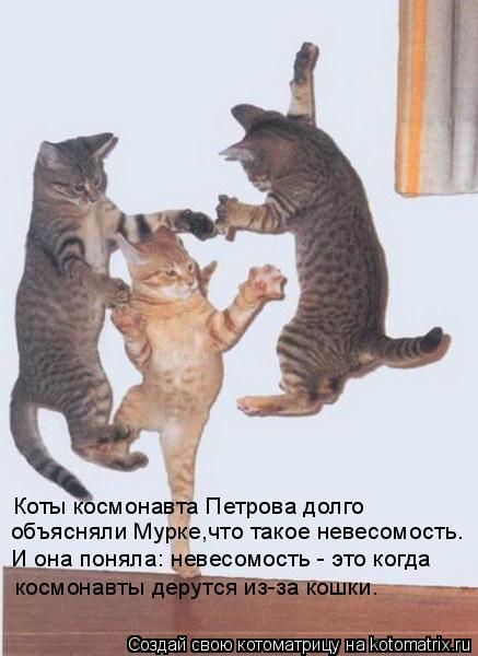 Котоматрица: Коты космонавта Петрова долго  космонавты дерутся из-за кошки. И она поняла: невесомость - это когда объясняли Мурке,что такое невесомость.