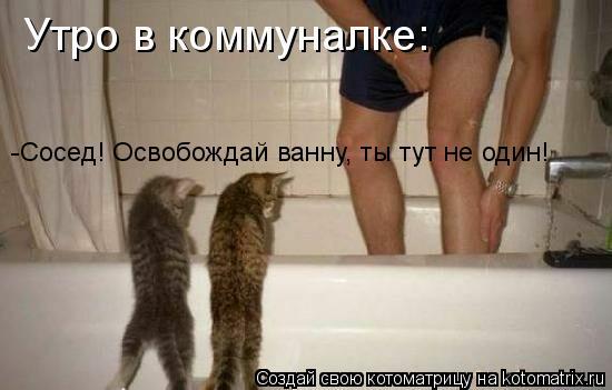 Котоматрица: Утро в коммуналке: -Сосед, освобождай ванну, ты тут не один! Утро в коммуналке:  -Сосед! Освобождай ванну, ты тут не один!