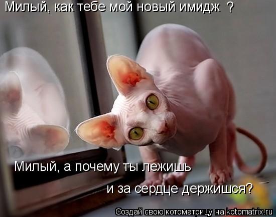 Котоматрица: Милый, как тебе мой новый имидж Милый, а почему ты лежишь и за сердце держишся? ?