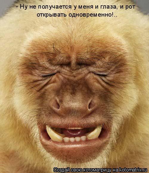 Котоматрица: - Ну не получается у меня и глаза, и рот открывать одновременно!..
