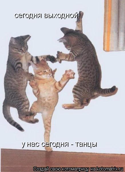 Котоматрица: сегодня выходной! у нас сегодня - танцы
