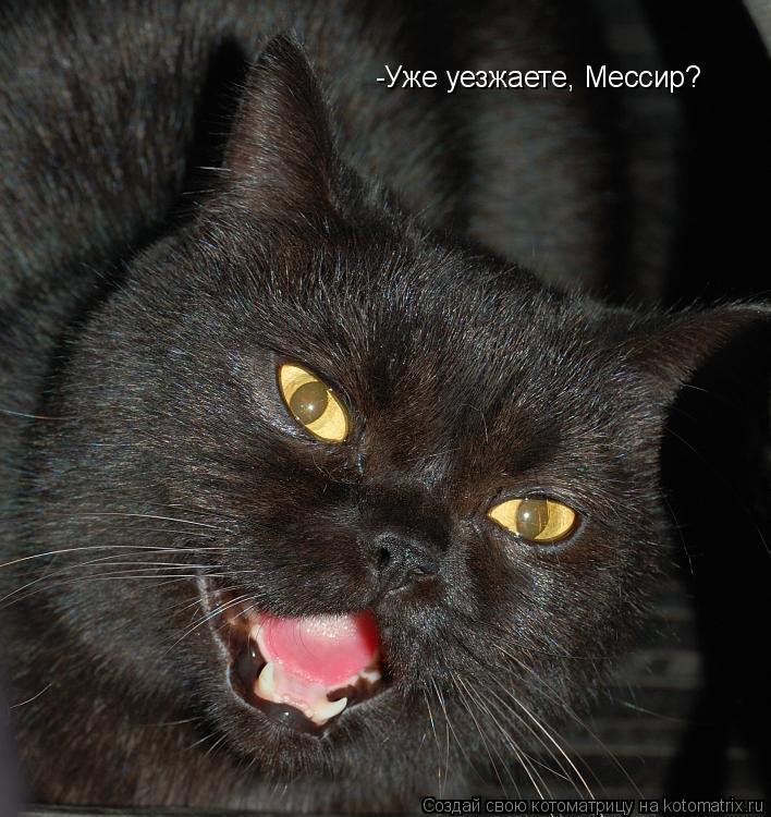 Котоматрица: -Уже уезжаете, Мессир?