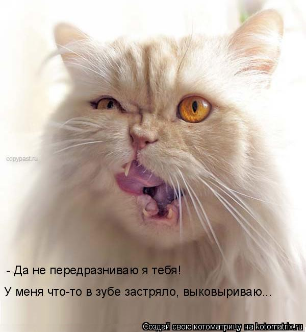 Котоматрица: - Да не передразниваю я тебя!  У меня что-то в зубе застряло, выковыриваю...