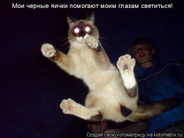 Котоматрица: Мои черные яички помогают моим глазам светиться!