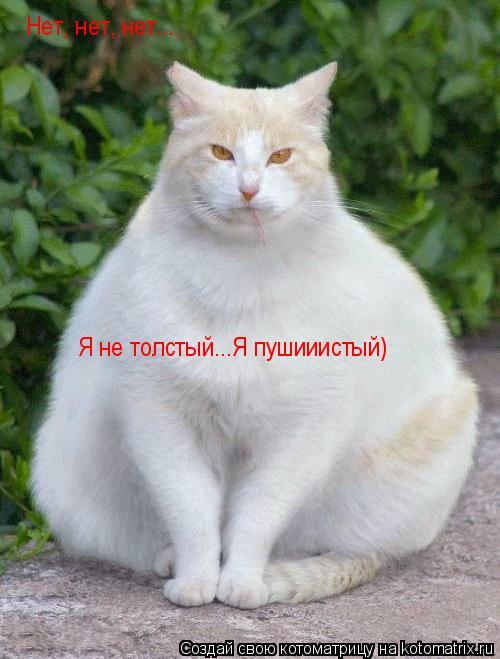 Котоматрица: Нет, нет, нет... Я не толстый...Я пушииистый)