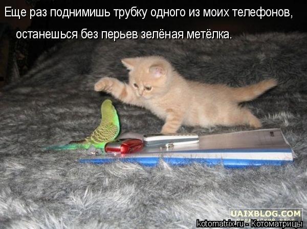 Котоматрица: Еще раз поднимишь трубку одного из моих телефонов, останешься без перьев зелёная метёлка.