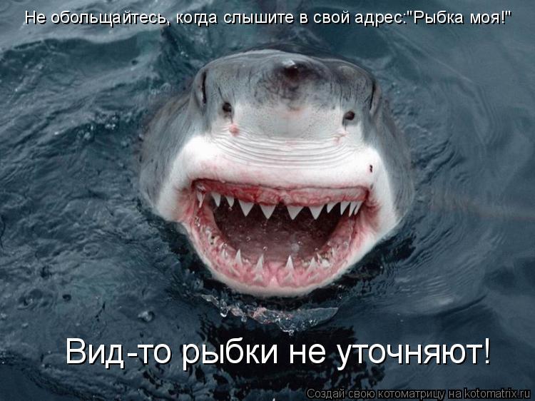 """Котоматрица: Вид-то рыбки не уточняют! Не обольщайтесь, когда слышите в свой адрес:""""Рыбка моя!"""""""