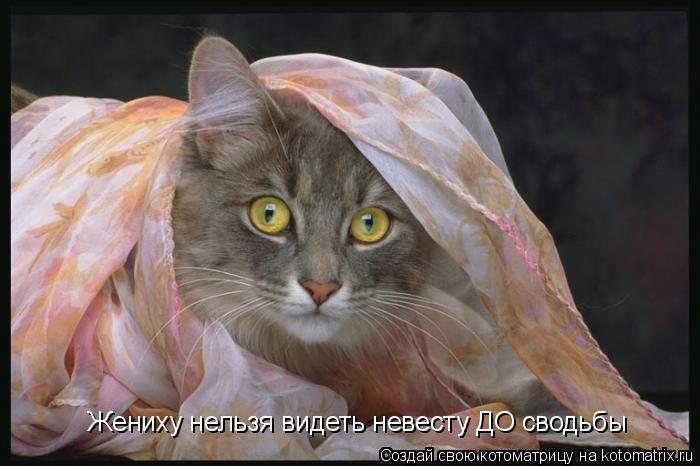 Котоматрица: Жениху нельзя видеть невесту ДО сводьбы