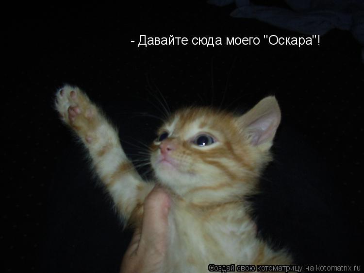"""Котоматрица: - Давайте сюда моего """"Оскара""""!"""