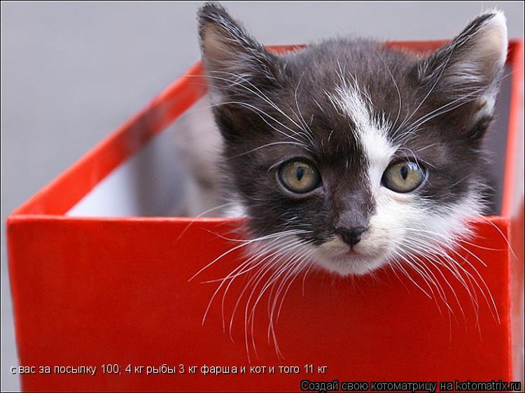 Котоматрица: с вас за посылку 100; 4 кг рыбы 3 кг фарша и кот и того 11 кг