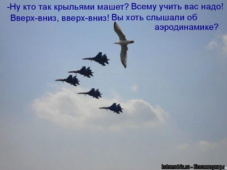 Котоматрица: -Ну кто так крыльями машет? Вверх-вниз, вверх-вниз! Всему учить вас надо! Вы хоть слышали об аэродинамике?