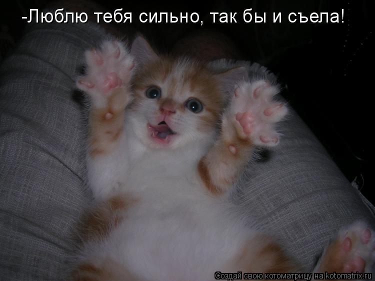 Котоматрица: -Люблю тебя сильно, так бы и съела!
