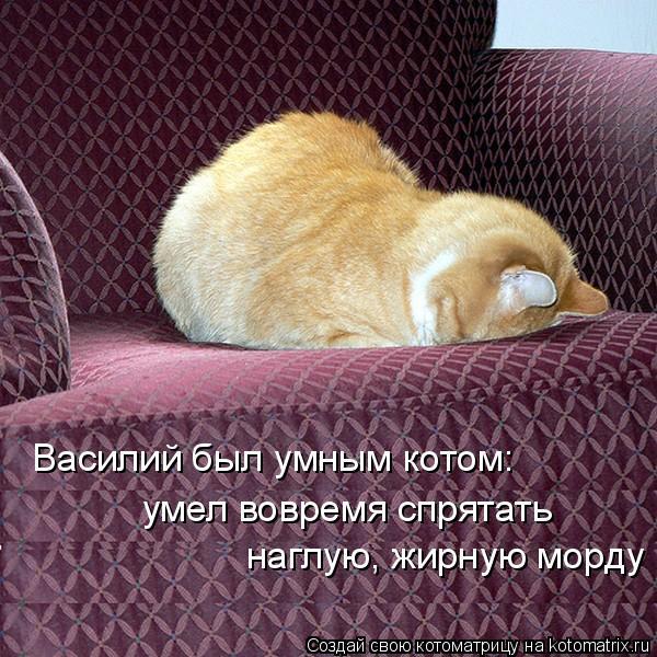 Котоматрица: Василий был умным котом: умел вовремя спрятать  наглую, жирную морду
