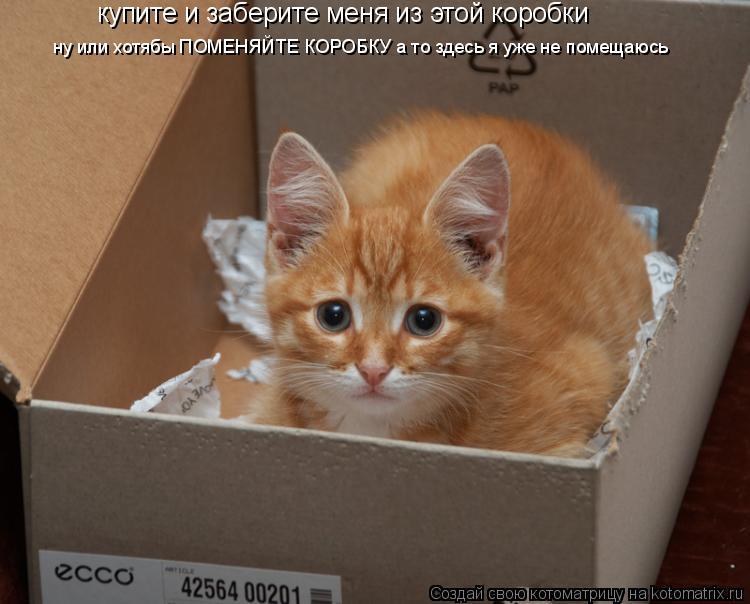 Котоматрица: купите и заберите меня из этой коробки ну или хотябы ПОМЕНЯЙТЕ КОРОБКУ а то здесь я уже не помещаюсь