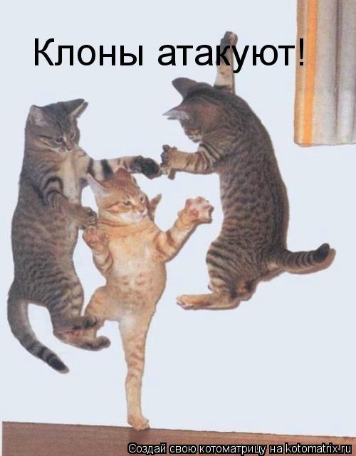 Котоматрица: Клоны атакуют!